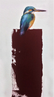 Kingfisher  11x17  Oil on Paper  2017