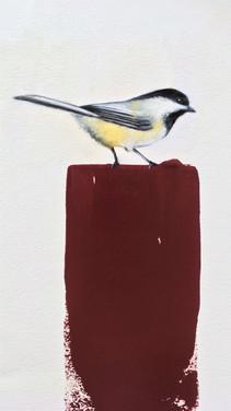 Chickadee  11x17  Oil on Paper  2017