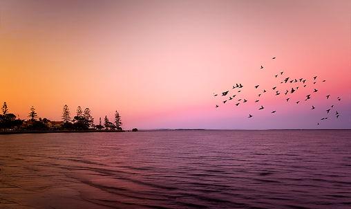 Pastel birds.jpg