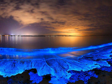 05/04/20 What is the Chemistry behind Bioluminescent Waves in San Diego?