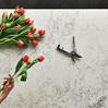 אבן קיסר: שם נרדף לשיש למטבח בישראל