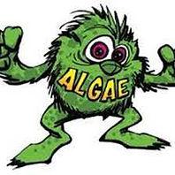 """<img src=""""cartoon.gif"""" alt=""""green algae """""""