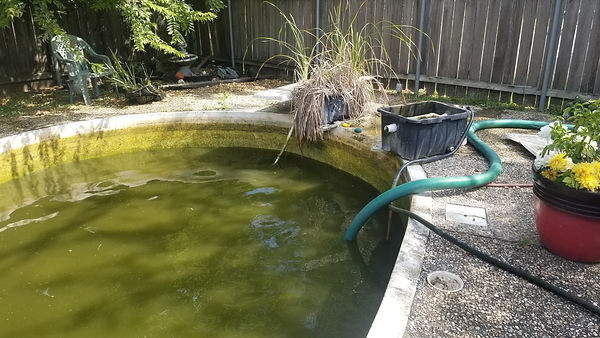 """<img src=""""greenpoolwater.gif"""" alt=""""before green pool was cleaned"""""""