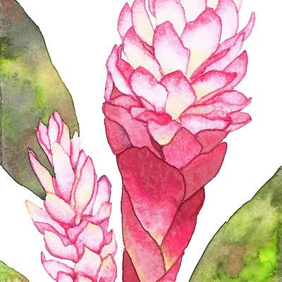Watercolor-tropicalplant