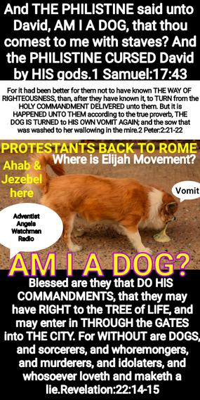 𝗔𝗠 𝗜 𝗔 𝗗𝗢𝗚? GOLIATH ASKED DAVID.... GOLIATH ALLIES VERSE DAVID ALLIES... 𝗙𝗼𝗿 𝘄𝗶𝘁𝗵𝗼𝘂