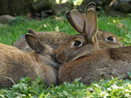 Gruppendynamik unter Tieren