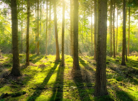 For Optimal Mental Health, Add a Regular Dose of Nature