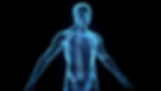 The-Human-Body.png