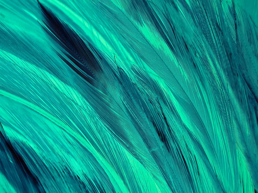 green-feather-texture-web.jpg