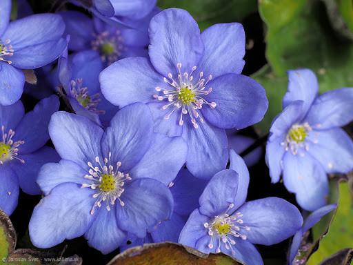 Jarné rastliny