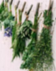 Canva - Medicinal Herbs.jpg