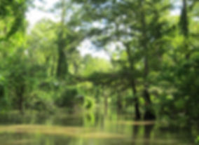 bayou sorrel.jpg