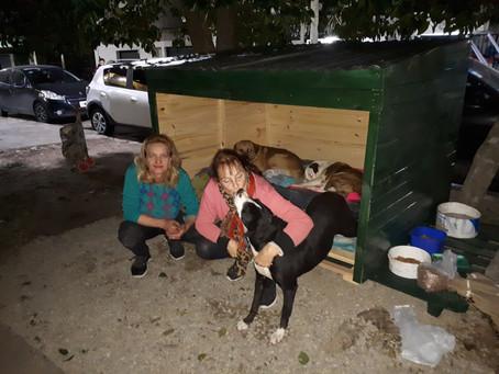 Des femmes construisent une maison pour protéger des chiens errants du froid en Argentine.