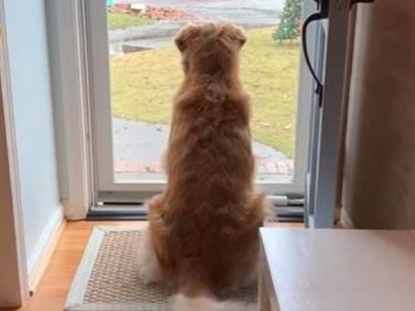 VIDÉO: Une chienne adore le facteur - sa propriétaire commence à filmer leur routine quotidienne