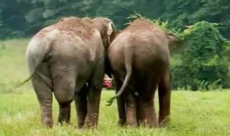 Des anciens éléphants de cirque ont été séparés pendant 22 ans, mais ce qui va se passer est sublime