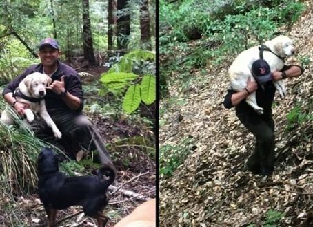 Une chienne aveugle retrouvée presque morte dans la montagne une semaine après sa disparition