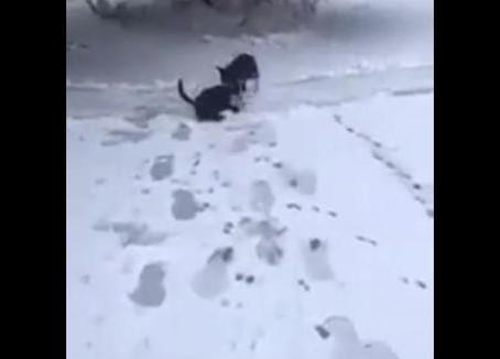 Un chien aperçoit un chat dehors dans la neige et le traîne à l'intérieur pour le mettre au chaud