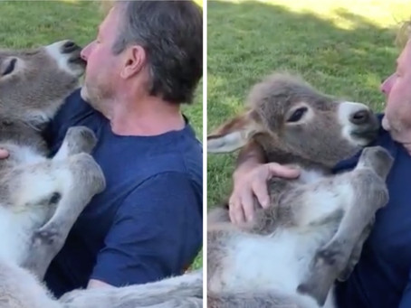Un homme blottit son âne dans ses bras et lui chante une chanson avec amour !