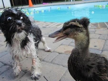 15 photos de chiens aux réactions tellement exagérées qu'elles en deviennent comiques