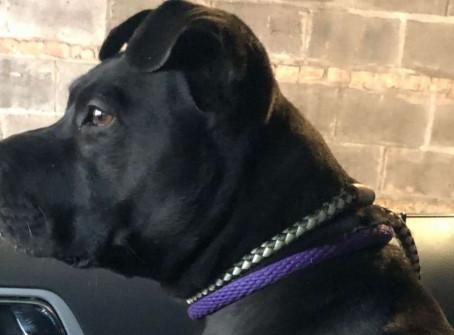 Une chienne perdue et errante depuis 1 an n'arrive pas y croire lorsqu'elle retrouve sa maîtresse !