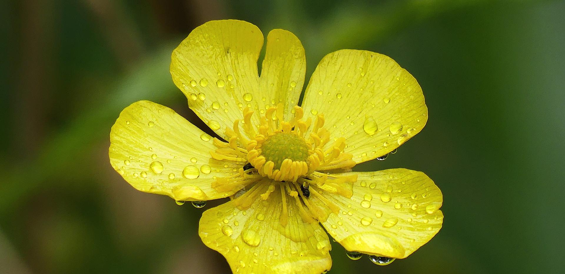 Une magnifique fleur