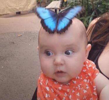 Un joli papillon atterrit sur la tête de ce bébé ; un moment magique qui fait sensation sur Internet