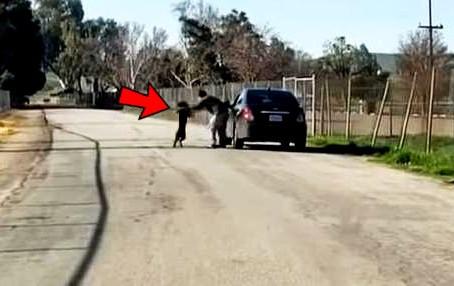Un chien poursuit désespérément une voiture après avoir été abandonné sur le bord de la route.