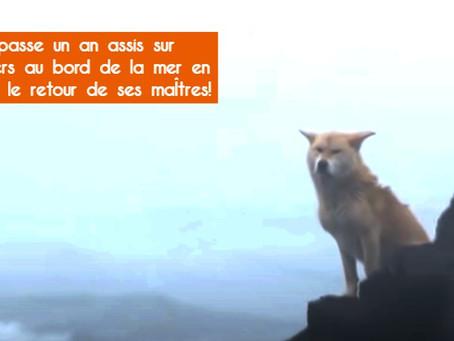 Un chien passe un an assis sur des rochers au bord de la mer en attendant le retour de ses maîtres