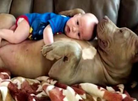 Un père défend son idée de laisser son enfant faire la sieste avec un pitbull