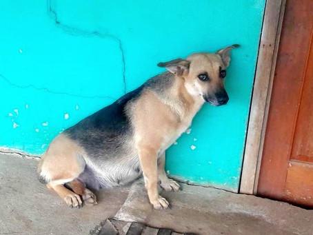 Une chienne enceinte abandonnée par sa famille reste assise jour et nuit devant sa maison
