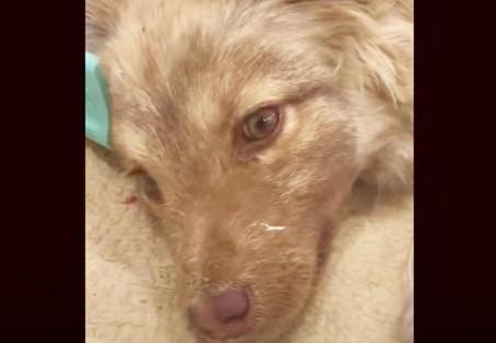 Une femme pleure en voyant une chienne gelée,puis découvre qu'elle est encore en vie en la soulevant