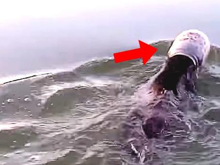 Vidéo : Un ourson nage avec la tête coincée dans un bidon en plastique - il est sauvé de justesse
