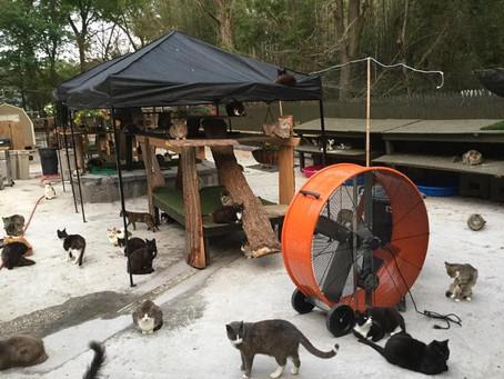 Il transforme sa maison en refuge pour chats errants après le décès de son fils !