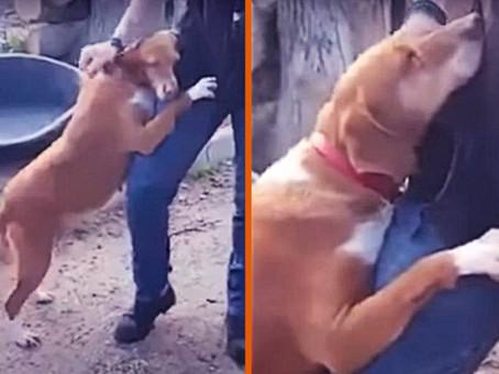 Un chien de refuge étreint un journaliste jusqu'à ce qu'il décide de l'adopter !