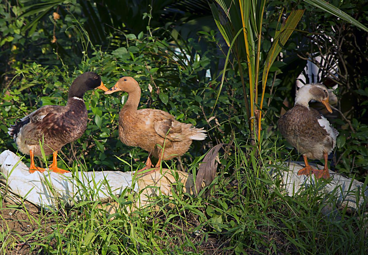 INDIEN Menschen Leben am Fluss FINEST-onTour 8533.jpg