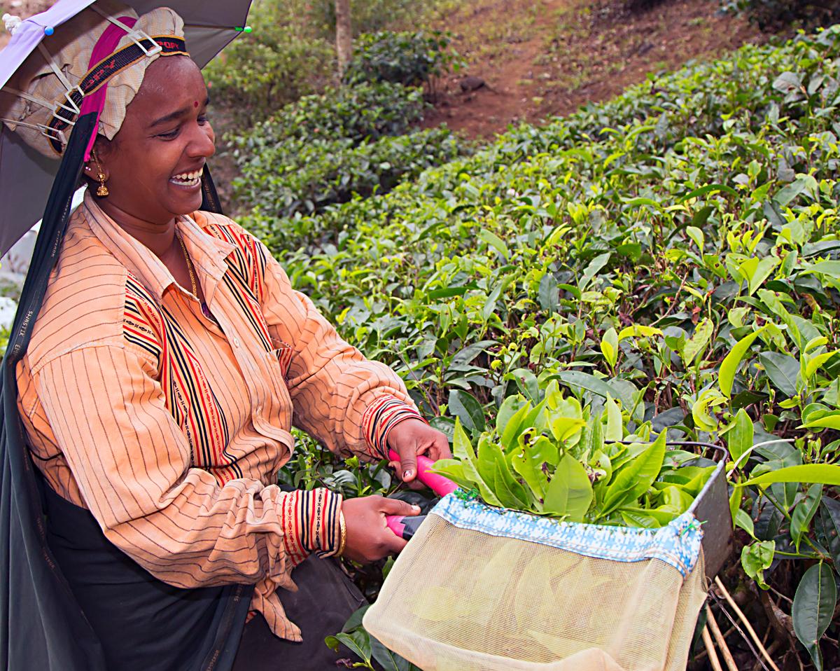 INDIEN Teeplantage FINEST-onTour 8153.jpg