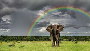 Elephant (28)-GI_HDR.jpeg