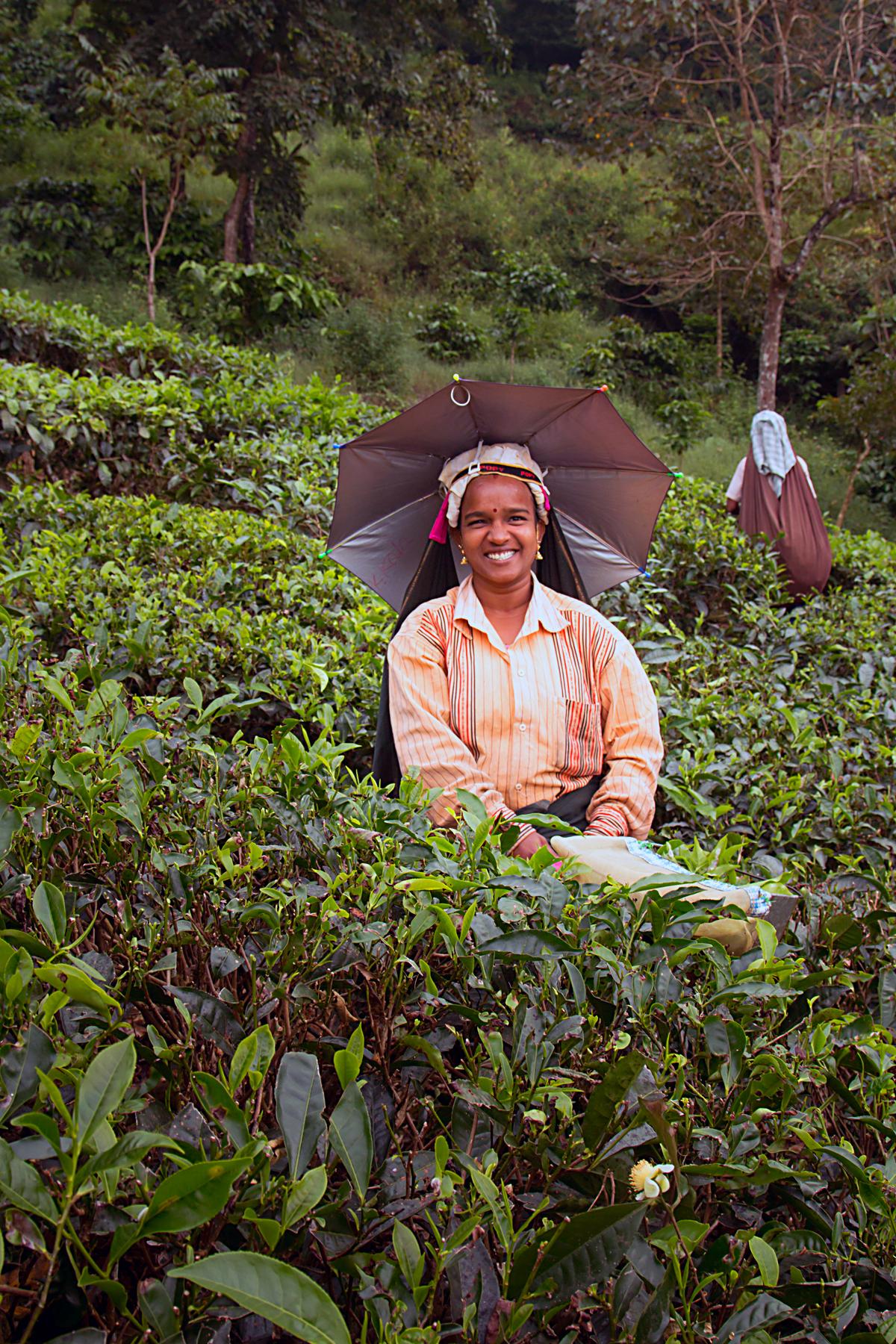 INDIEN Teeplantage FINEST-onTour 8174-2.jpg