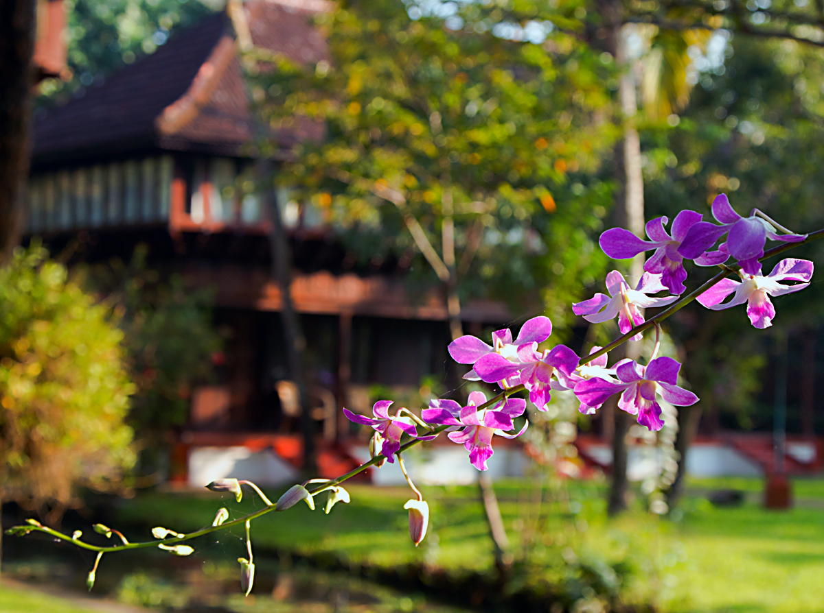 INDIEN Hotel  Kumarakom Lake Resort FINEST-onTour 8313.jpg