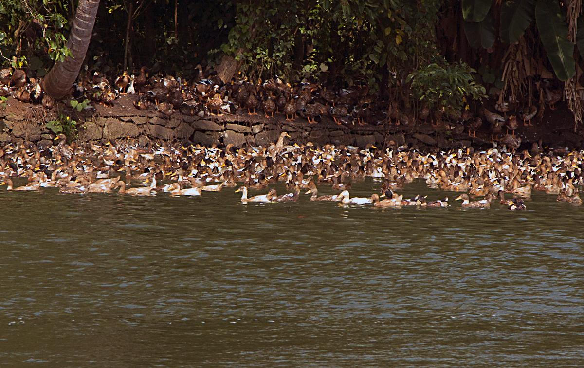 INDIEN Menschen Leben am Fluss FINEST-onTour 8438.jpg