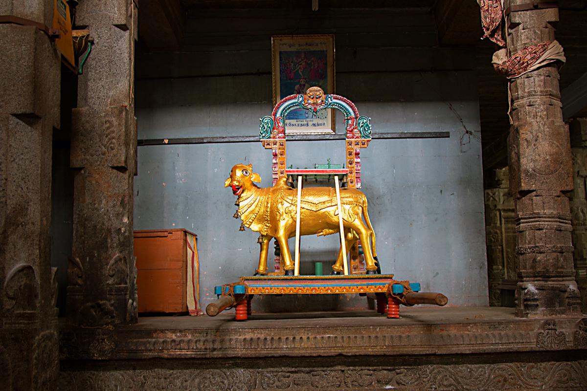 INDIEN Chennai Menschen Tempel FINEST-onTour 7490.jpg