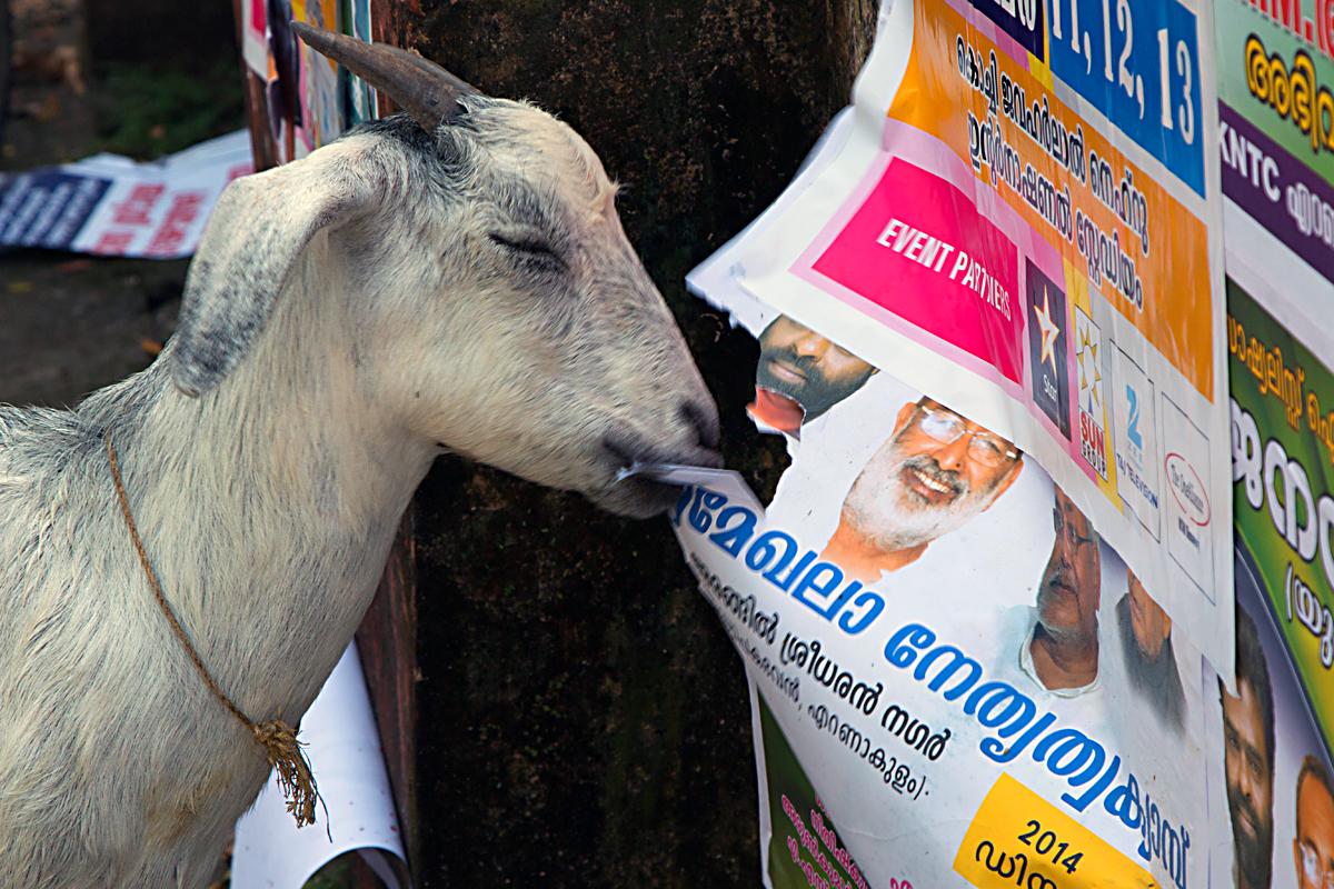 INDIEN Cochin Kerala Menschen Fischmarkt FINEST-onTour 8890.jpg
