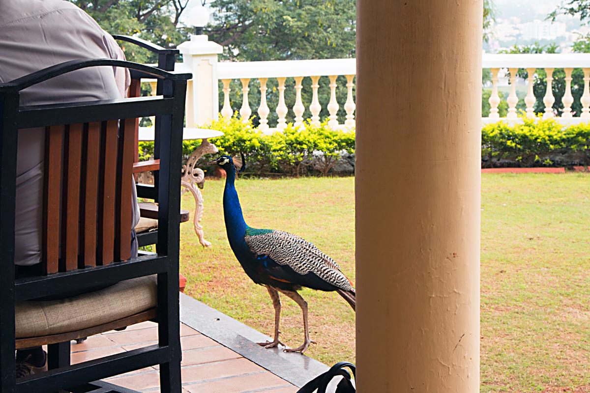 INDIEN ITC Hotel Vilasa FINEST-onTour 7835.jpg