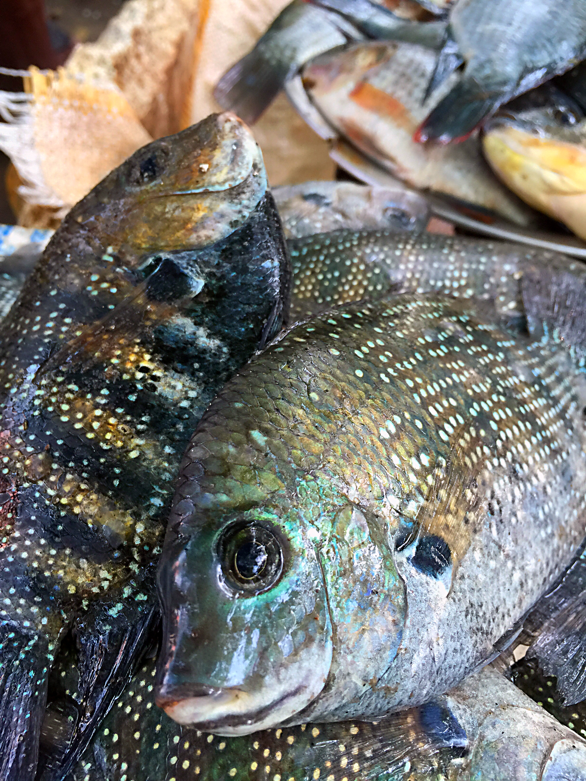 INDIEN Cochin Kerala Menschen Fischmarkt FINEST-onTour 2336.jpg