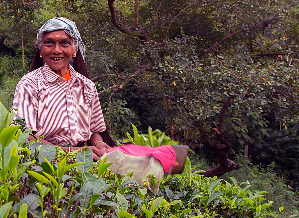 INDIEN Teeplantage FINEST-onTour 8181.jpg