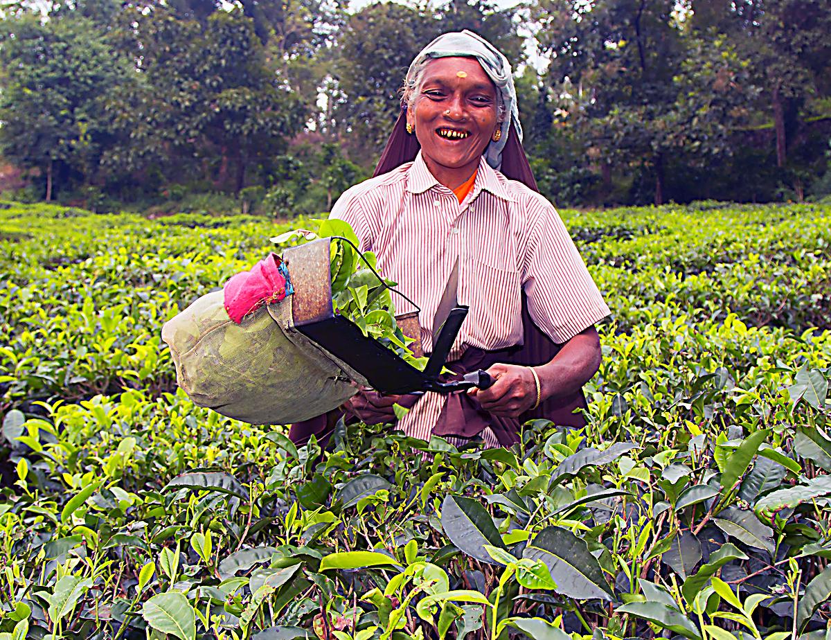 INDIEN Teeplantage FINEST-onTour 8155-1.jpg