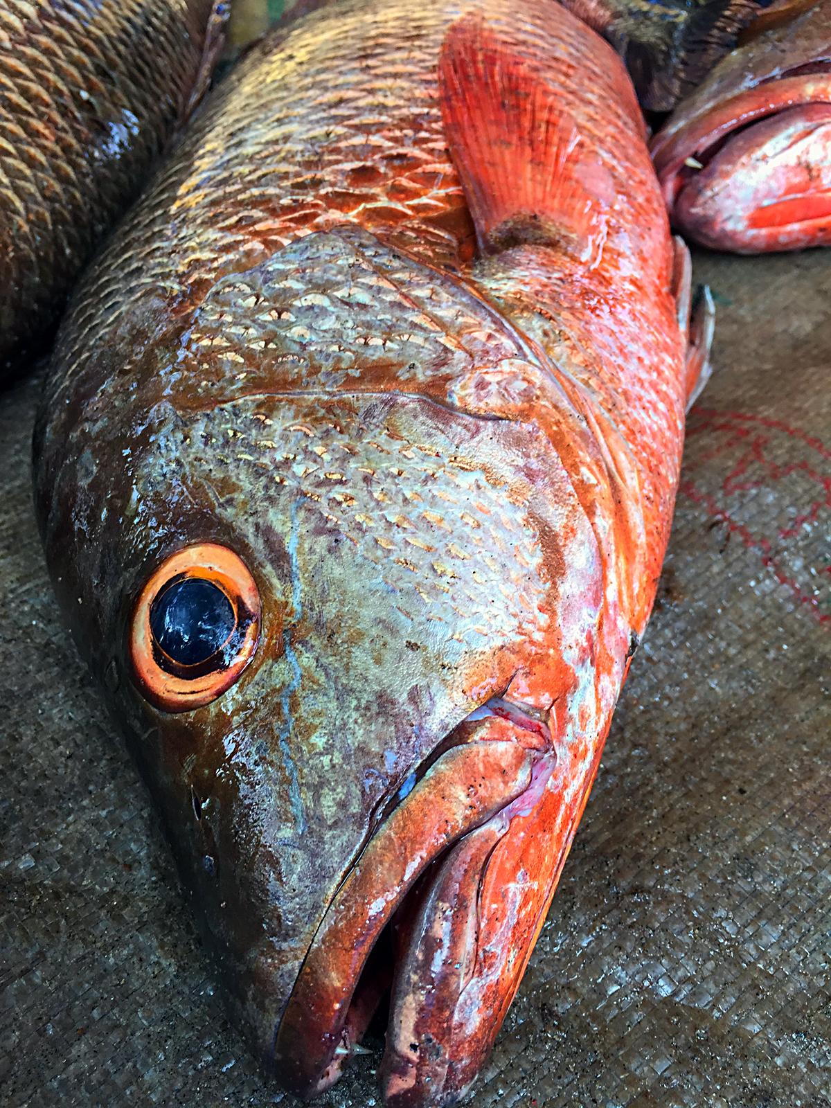 INDIEN Cochin Kerala Menschen Fischmarkt FINEST-onTour 2337.jpg