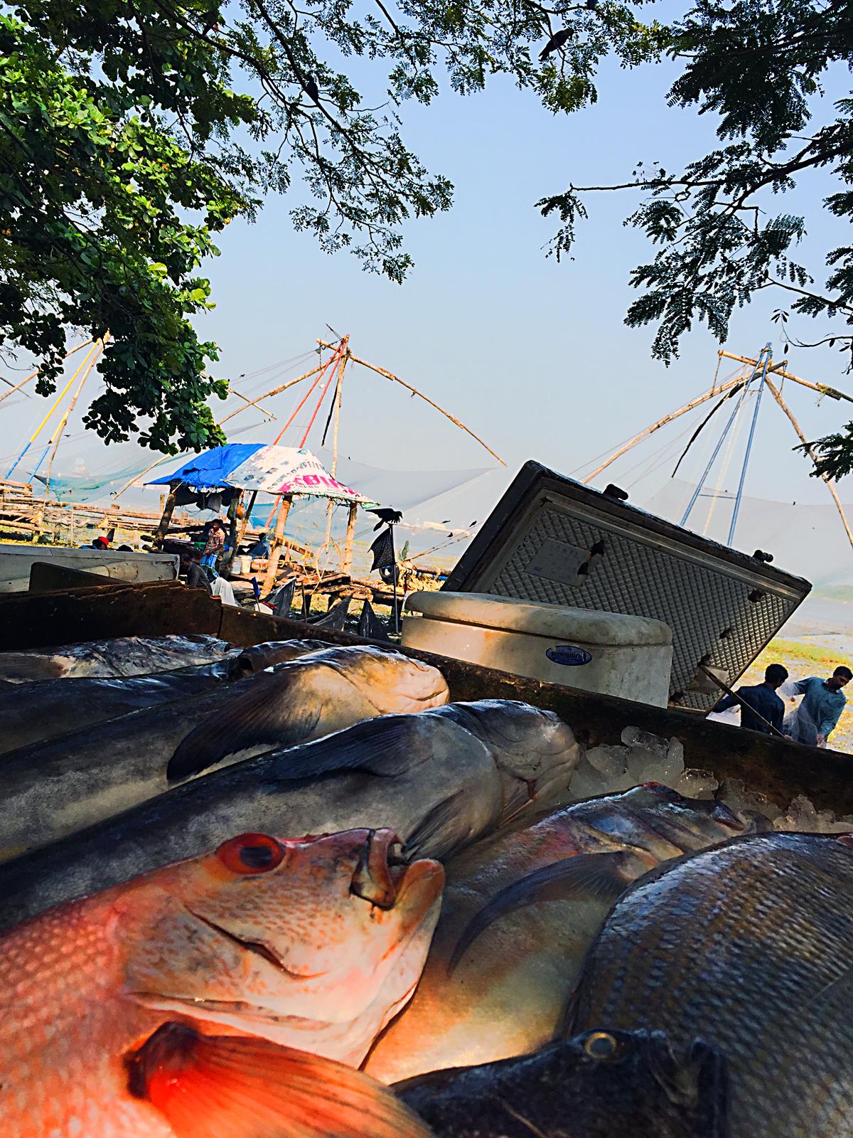 INDIEN Cochin Kerala Menschen Fischmarkt FINEST-onTour 2335.jpg