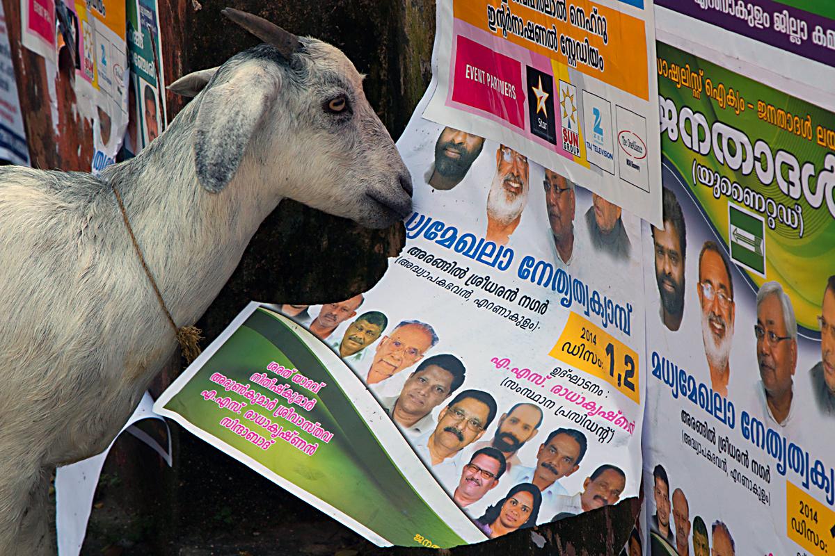 INDIEN Cochin Kerala Menschen Fischmarkt FINEST-onTour 8886.jpg