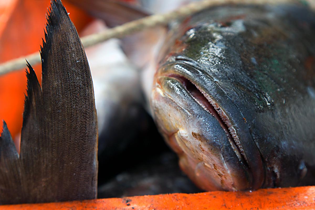 INDIEN Cochin Kerala Menschen Fischmarkt FINEST-onTour 8833.jpg